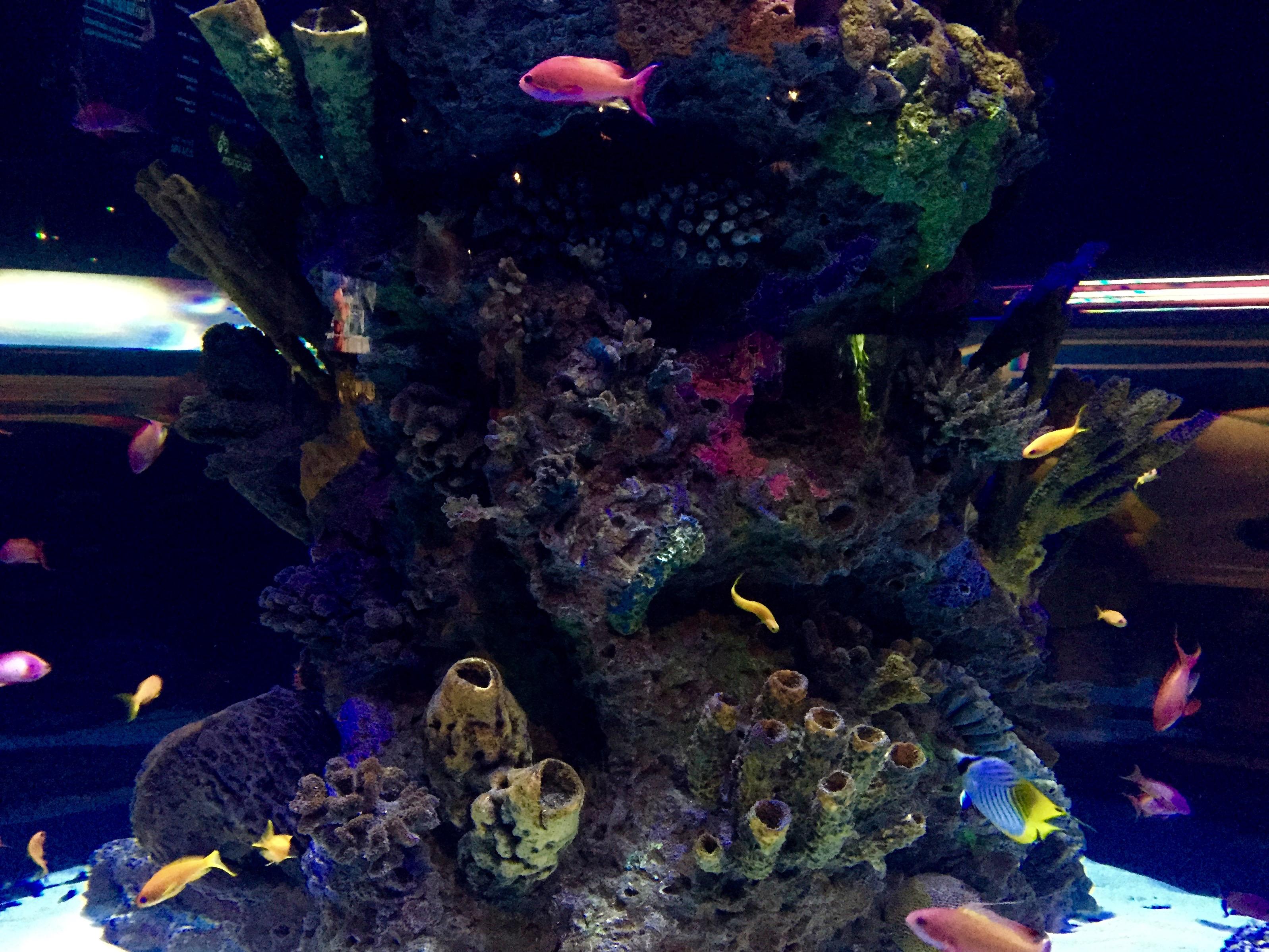 Freshwater aquarium fish vancouver - Img_4493 Img_4486 Img_4411 Img_4494 Img_4415 Img_4454